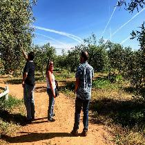Olive Mill - Oleotourism - Private