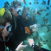 Scuba-Diving with meal, official guide and Transportation
