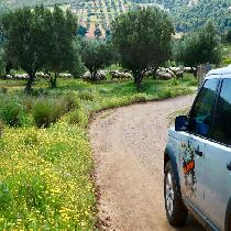 Uncharted Escapes: Athens Private Tour in the Chestnut Forest of Steni Evia