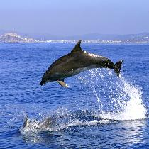 Gibraltar Dolphins Full Day Tour with Official Guide, Free time, Entrance Fees and Transportation