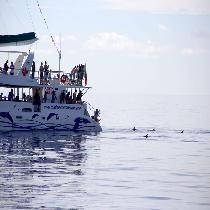 Catamaran tour with Escort and Boat tickets